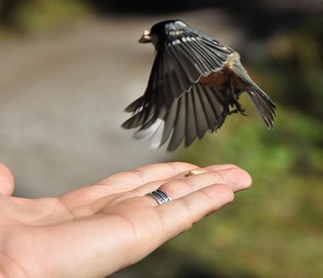 Best-bird-picture