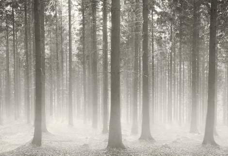 polish-forest.jpg
